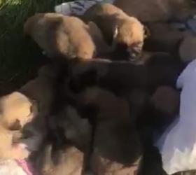 Ağzını bağladıkları çuvallar içinde yavru köpekleri ölüme terk ettiler