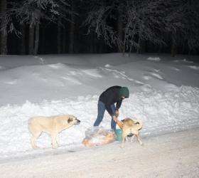 Mesaisini bitiriyor, sokak hayvanlarının yanına gidiyor