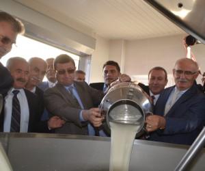 Bafra'da Damızlık Manda Üreticileri Birliği Süt Toplama Merkezi Açıldı