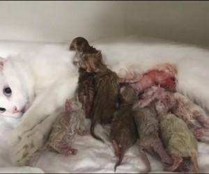 (Özel Haber) Kedicikler sezeryanla kurtarıldı