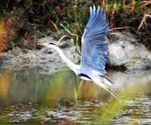 UNESCO adayı Kuş Cenneti'ndeki foto safariye büyük ilgi