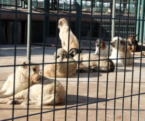 Hayvan barınağında 408 sahipsiz köpek tedavi edildi
