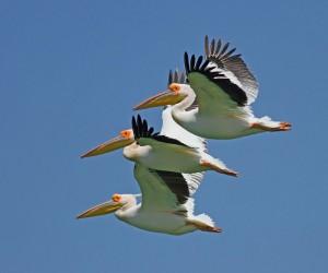 Yedikuğular Kuş Cenneti'ne kamera sistemi kuruluyor