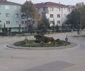 Başıboş atlar tehlike saçmaya devam ediyor