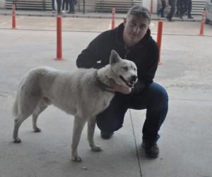 Sadık köpek acil kapısında sahibini böyle bekledi
