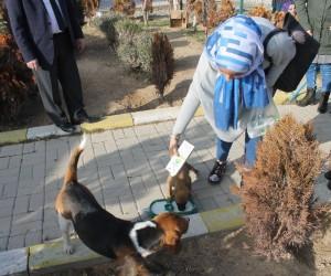 Karaman'da KYK'lı öğrenciler sınav stresini hayvan barınağını gezerek attı
