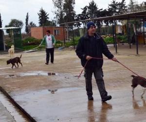 Didim'de hayırseverlerden hayvan barınağına destek