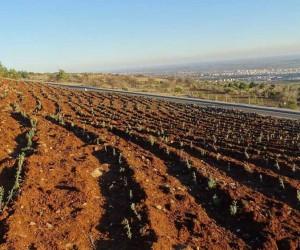 Resul Osman mesire alanında Lavanta ormanı kuruluyor