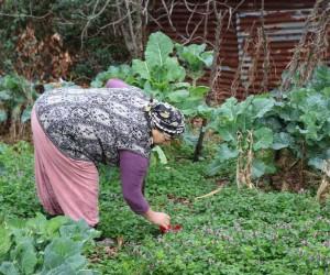 (Özel Haber) Bahçesinde yüzlerce çakmak gaz tüpü olan babaannenin feryadı