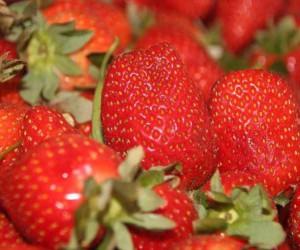 Yaz meyvesi çileğin fiyatı el yakıyor