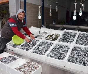 Ordulu balıkçılar hamsinin peşine Gürcistan'a gitti