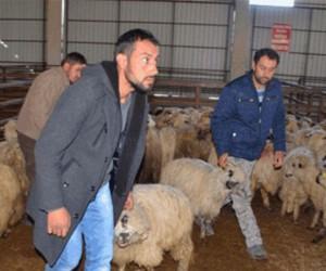 Köyüne geri dönene 300 koyun ve maaş