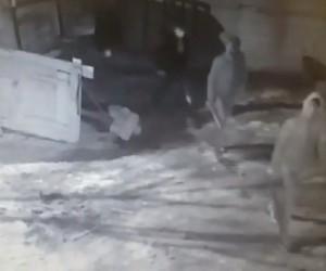 Horasan'da hayvan hırsızlığı son anda önlendi