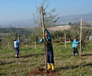Dikilen ağaçlar vatandaşın ekonomisini canlandıracak