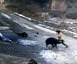 Yaban domuzu köyde dehşet saçtı: 1 ölü, 1 yaralı