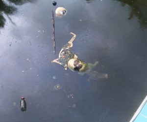 Terk edilmiş villanın havuzuna düşen 2 kedi öldü