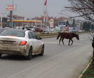 Edirne'de atlar yine sahnede
