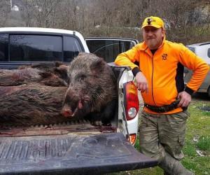 Avcılar yaban domuzlarına geçit vermiyor