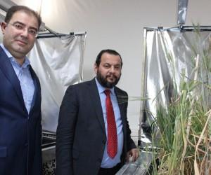 Türkiye'de ilk hızlı bitki ıslahı KMÜ'de hayata geçirildi