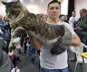 Macaristan'da Kedi Güzellik Yarışması