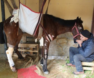 Ölüme terk edilen at Aydın'da ameliyat edildi