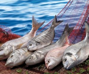 Balıkçılık sektörü 1 milyar dolar ihracata koşuyor
