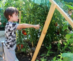 Çankaya'da kent tarımı yaygınlaşıyor