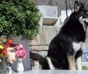 Arjantin'de vefalı köpek, 11 yıl boyunca sahibinin mezarı başında bekledi
