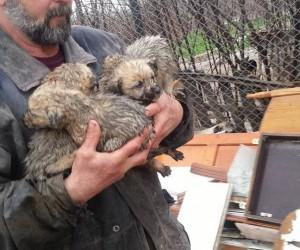 Yolda önüne çıkan yavru köpekleri ölümden kurtardı