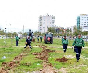 Mezitli'de sele karşı düzenleme yapılıyor