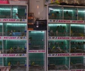 Ev ve süs hayvanı satış yerleri denetlendi