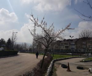 İnegöl'de ağaçlar çiçek açtı
