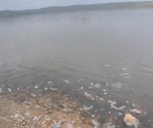 Boğazköy'de balıklar karaya vurdu