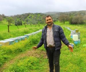 Aydın'da arılar bu defa yağma savaşına başladı