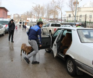 Arnavutköy'de öğrenci servisi zincirlemeye kazaya karıştı. Kazada çok sayıda kişi yaralanırken, olay yerine itfaiye ve ambulans ekipleri sevk edildi.