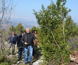 Orman köylüsü, odun dışı ürünlerden 6 milyon lira gelir elde etti