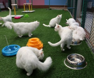 Van kedilerinin bu yılki ilk yavruları dünyaya geldi