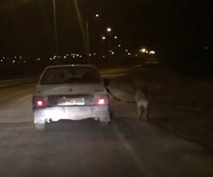 Köpeği otomobile bağlayıp kilometrelerce koşturdular