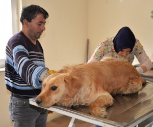 Otomobilin çarptığı yaralı köpek tedavi altına alındı