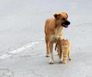 Kedi ve köpeğin dostluğu, görenleri şaşırtıyor