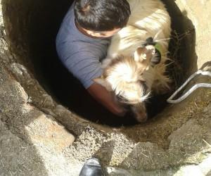 Koyun kuyuya düştü ekipler kurtardı