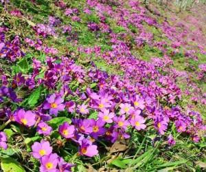 Doğu Karadeniz'deki fındık bahçeleri rengarenk