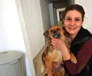 Biga'da gönüllü hayvan severler bir araya geldi