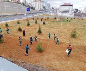 Trabzon'un güzelleşmesi için 114 bin 307 ağaç dikildi