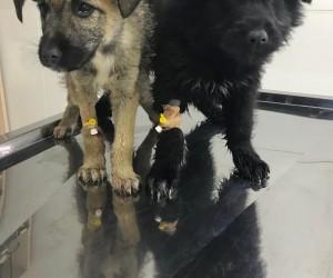 Isparta'da 18 köpek ölüsü bulundu