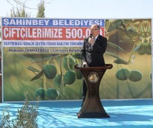 Zeytinli Mahallesine zeytin fidanı dağıtıldı