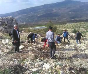 Mersin'de denetimli serbestlik yükümlüleri fidan dikti