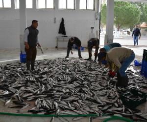 """DALKO Başkanı Yalılı; """"Amacımız bölge ve ülke insanına ucuz balık yedirmek"""""""