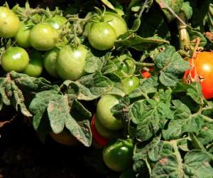 Kent Tarım Hobi Evi'nde sebze yetiştiriciliği eğitimleri veriliyor