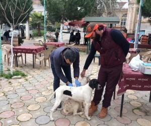 İznik'te köpeklere kuduz aşısı
